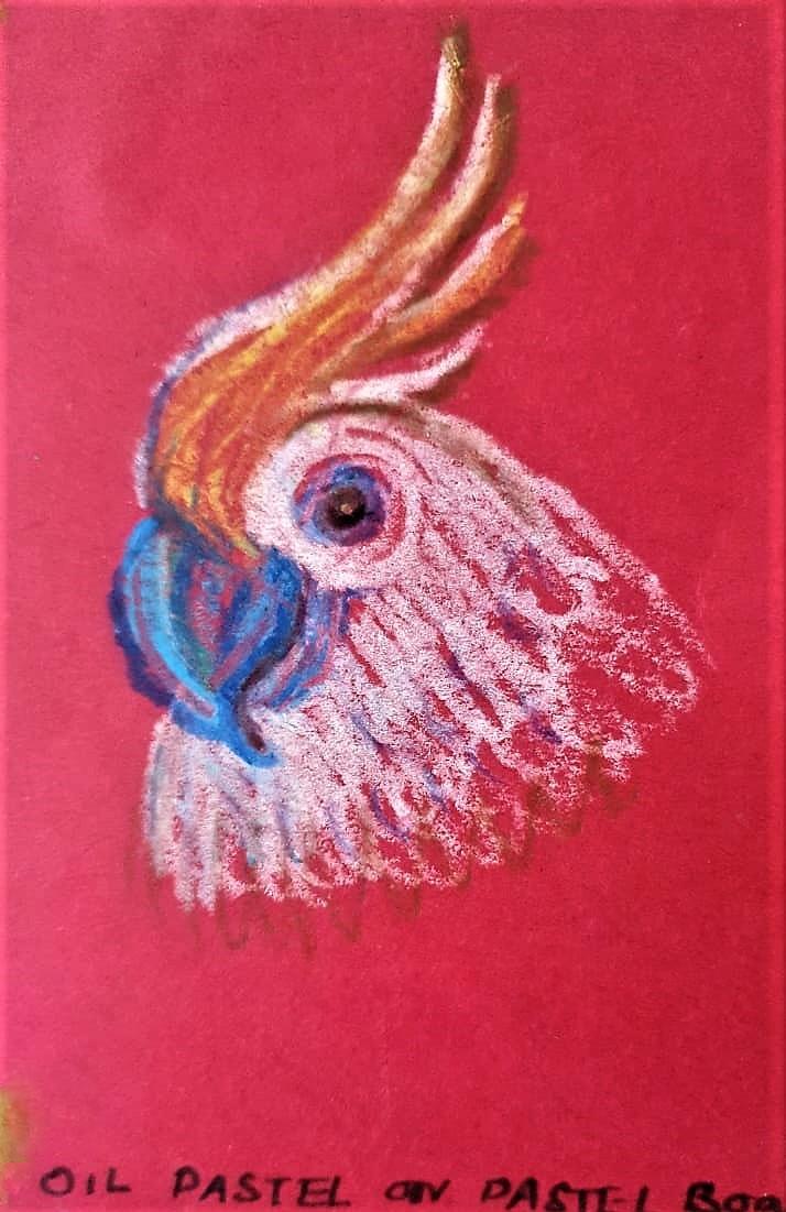 Cockatoo - Oil pastel work on color Pastel paper -Kenfortes children online sketching painting arts classes